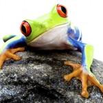 Frosch Wohlfühlpaket